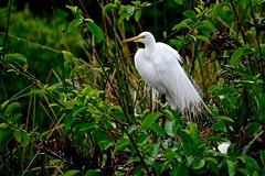 Shaking Off the Rain (bmasdeu) Tags: rain wildlife nest spring wetlands rookery florida birds plumage feathers