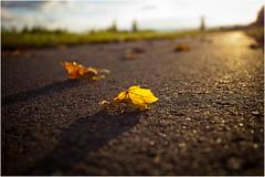 Sunset . (:: ed 37 ::) Tags: autumn light sunset shadow canon germany deutschland licht sonnenuntergang herbst lightshadow schatten radweg wideangel saxonyanhalt sachsenanhalt ef1740mmf4lusm canoneosd canoneos5dmarkii