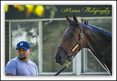 Cash For Ever (EASY GOER) Tags: horses horse ny sports racetrack race canon track competition racing 7d athletes sporting 56 thoroughbred equine thoroughbreds belmontpark 400mm