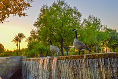 Carnegie Plaza (bratulin) Tags: california trees sunset lake building water geese pond palmtrees sanbernardino inlandempire sanbernardinocounty