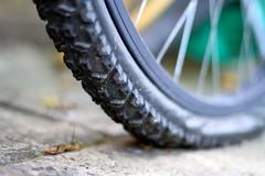 2/31: Flat hunting (judi may) Tags: bike bicycle dof bokeh spokes tyre flattyre bicycletyre octoberamonthin31pictures