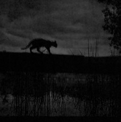 Lake (Timoleon Vieta II) Tags: portrait bw cat landscape grey fishing kitten key alone low bleak savannah bengal timoleon