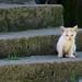 Gatin * Kitten