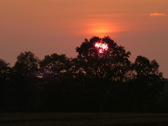 Baum fngt Sonne-tree catches sun (Anke knipst) Tags: sunset tree sonnenuntergang baum
