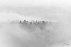 Niebla... (E.M.Lpez) Tags: naturaleza blancoynegro clouds landscape monocromo blackwhite andaluca rboles paisaje nubes rbol otoo octubre nublado landschaft niebla nube jan bruma virado 2014 otoal alcallareal