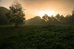 Gumen-Penfao se lve (dono heneman) Tags: light sky sun france tree nature sunrise soleil pentax lumire ciel nuage paysage arbre brume vegetal lever leverdesoleil vgtation paysdelaloire loireatlantique vgtal gumenpenfao pentaxart pentaxk3 gumenpenfaoselve
