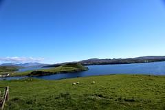 Miss you Highlands... #highlands #scotland #mountains #skye #nature #trip #uk #travel #love #flowers (m.akira07) Tags: uk trip travel flowers mountains skye love nature scotland highlands