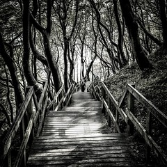 A Forest (dubdream) Tags: wood light shadow people blackandwhite white black tree girl forest landscape denmark path panasonic railing danmark klint mn mns klinteskoven dubdream dmcgx7