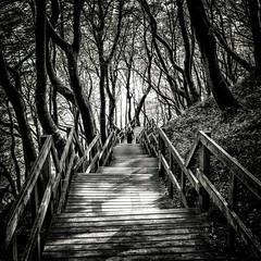 A Forest (dubdream) Tags: wood light shadow people blackandwhite white black tree girl forest landscape denmark path panasonic railing danmark klint møn møns klinteskoven dubdream dmcgx7