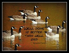 Geese with quote (clickclique) Tags: reflections geese pond colours quote colourful