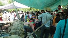DSC01957 (Rincn del Aguila) Tags: costumbres chilenas esquila tipicas