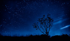 The Sky Tonight (Edinburgh) (Photography Revamp) Tags: city uk tree grass night edinburgh unitedkingdom nightsky arthursseat nightexposure midlothian nikond3200 nikond7100 nikond5200
