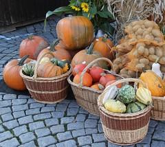 Pumpkin variety (Gerlinde Hofmann) Tags: germany thuringia town hildburghausen marketplace basket pumpkin marketday erntedankfest erntedankfest2014 germanthanksgving handmade potato vegetable