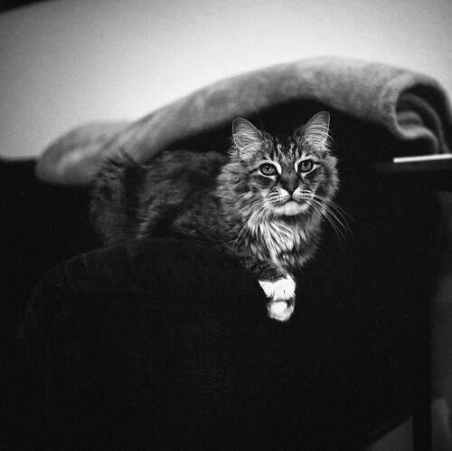 My Cat Friend