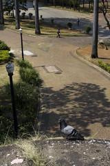 vale do anhangabaú | sp (Th. C. Photo) Tags: street color animal brasil photography downtown geometry pigeon centro streetphotography pombo vale sp ave streetphoto rua paulo fotografia cor são geometria colorido anhangabaú fotografiaderua thiagoc