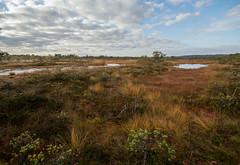 Kakerdaja sgis-25 (Raimond Z.) Tags: swamp bog