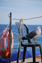 "Lifeguard (wallace39 "" mud and glory "") Tags: sea summer bird mare estate seagull gabbiano uccello rememberthatmomentlevel4 rememberthatmomentlevel1 rememberthatmomentlevel2 rememberthatmomentlevel3 rememberthatmomentlevel5"