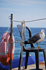 "Lifeguard (wallace39 "" mud and glory "") Tags: sea summer bird mare estate seagull gabbiano uccello rememberthatmomentlevel4 rememberthatmomentlevel1 rememberthatmomentlevel2 rememberthatmomentlevel3 rememberthatmomentlevel5"