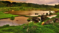 Tana Toraja (flowerikka) Tags: water indonesia rocks sulawesi riceterrace celebes tanatoraja