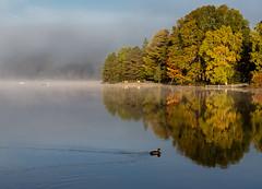 Lake of Bays-3390 (RG Rutkay) Tags: ontario bird fall nature water clouds landscape outdoors dawn duck shore algonquin mallard dwight morningsky lakeofbays marylake moskoka tdpcoutting