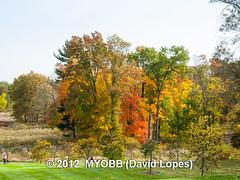 Duke Farms-203190 (myobb (David Lopes)) Tags: fall nature newjersey nj duke leafs tress hillsborough dukefarm farmnaturefalltressleafsnjnew jerseyhillsborough