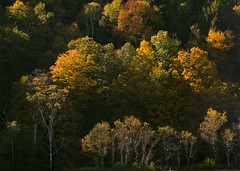 Autumn Light (BurningQuestion) Tags: autumn trees sunset orange fall nature leaves yellow forest season landscape evening countryside vermont seasons country foliage bristolvt bristolvermont