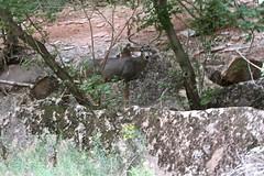 IMG_1942 (bluegrass0839) Tags: canyon national hoodoo bryce zion zionnationalpark brycecanyon nationalparks narrows hoodoos horsebackride parkthe
