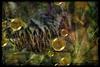 "Afterglow (Diana Thorold.) Tags: art texture psp interesting hypothetical 2014 manipulate kpt5 flamingpear uie artdigital shockofthenew trolled pixlr awardtree dianathorold magicunicornverybest ""exoticimage"" netartii"