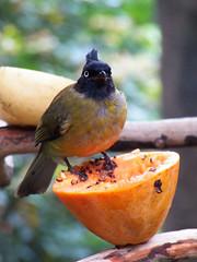 x100_1543 (samuel_wkip) Tags: bird hongkong kodak central hongkongpark hongkongparkaviary kodakz990 z990 hongkongpark香港公園 hongkongparkaviary香港公園觀鳥園