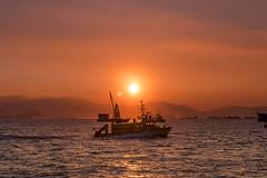 Dusk (mikemikecat) Tags: sunset sea summer nature water landscape hongkong scenery dusk sony 夕陽 夕暮れ 日落 magicmoment 夕焼け 黃昏 綺麗 西九龍海濱長廊 a7r sel2470z