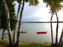 Curled Northern Birch Bark (nancy rae) Tags: autumn lake landscape morninglight michigan birchtrees