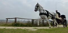 18.10.2014 (gzammarchi) Tags: persona italia natura cavallo animale paesaggio ravenna marinaromea piallassa camminata itinerario calesse piallassabaiona