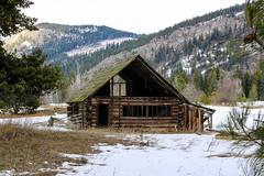 An old beauty [Explored] (Jessie T*) Tags: scotchcreekbc canada homestead farm logbuilding snow winter trees historic pinetree shuswaplake
