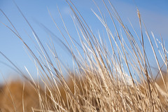 chilling in the field (Jostein Nilsen Photography) Tags: straws field nature dof bokeh