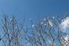 Ψίνθος (Psinthos.Net) Tags: ψίνθοσ psinthos nature countryside φύση εξοχή φλεβάρησ φεβρουάριοσ february winter χειμώνασ γαλάζιοσουρανόσ ουρανόσ sky bluesky σύννεφα νέφη clouds σύννεφο cloud sunnyday ηλιόλουστημέρα μέρα day noon μεσημέρι μεσημέριχειμώνα χειμωνιάτικομεσημέρι λαουτάρι λαουτάριψίνθου περιοχήλαουτάρι laoutari laoutariarea laoutaripsinthos sunlight φώσήλιου φώσηλίου φώσ σκιά light shadow almondtree floweryalmond whiteblossoms blossoms άνθη λευκάάνθη άσπραάνθη ανθισμένηαμυγδαλιά αμυγδαλιά αεροπλάνο ουρά tail airplane plane aeroplane