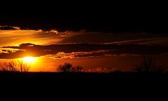 "0091 ""FUSION in CAMARGUE"" (ipon1) Tags: sunset coucherdesoleil sunrise soleil sun arbres trees ombres shadows lumière light clouds nuages horizon étangs ponds marshes goldenlight gold fire feu flickr yahoo like elements best unforgettable outdoor outside happy hapiness pov cool niceshot bokeh fun fave shine curvy autofocus 2017 spring printemps ipon1 sunshine photographe photographer photo wonderful stunning amazing shades reflex camera snapshot instantané nikon nikond90 photoshoot views magicwork extérieur"