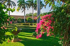 Hotel El Convento Courtyard (fotofrysk) Tags: hotelelconvento courtyard royalpalms shrubbery gree hedges centralamericatrip nicaragua leon sigma1750mmf28exdcoxhsm nikond7100 201702049931