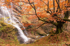 El ultimo guardian de uguna (Pruden Barquin) Tags: paisaje landscape largaexposicion hayas hayedos cascada uguna tonos tone otoño otoñal prudenbarquin fotografia nikond610 nikkor