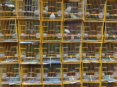 Jail Birds (cowyeow) Tags: kowloon funny funnychina weird asia asian hongkong dumb funnyhongkong 香港 china chinese pet pets princeedward market mongkok unique yuenpostreet birdstreet birdmarket bird birds yuenpostreetbirdgarden cute cage cages caged freedom shop store jail