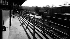 Bocketts Farm (lsullivanart) Tags: fuji fujifilm fujix fujix70 england europe uk britain landscape sunrise sunset sky scenery winter surrey monochrome bw blackandwhite
