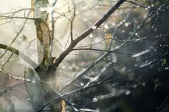 Syderstone Common 09/04/2017 (Matthew Dartford) Tags: atmospher atmospheric bokeh bokehlicious dof norfolk outoffocus syderstonecommon tree