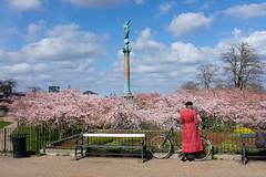 Langelinie (Ulrich J) Tags: sakura forår kirsebærblomster statue street mennesker københavn langelinie træer cykel danmark cherryblossom copenhagen denmark spring trees