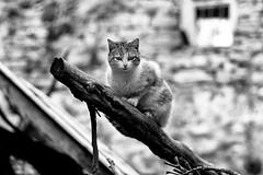 De los gatos de Puértolas (carnuzo) Tags: leica m9