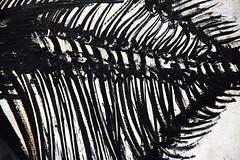 Son poids (Gerard Hermand) Tags: 1702116626 gerardhermand france paris canon eos5dmarkii formatpaysage art œuvre musée museum muséedartmoderne bernardbuffet peinture tableau painting squelette skeleton poisson fish detail
