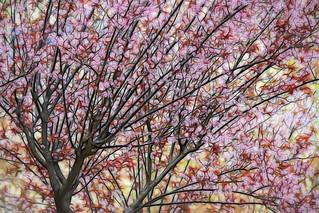 Dream spring tree...