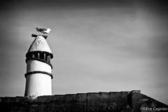 Gaviota sobre una chimenea (B/N) - Seagull on a chimney (B/W) (Eva Ceprián) Tags: gaviota seagull chimenea chimney tejado roof airelibre outdoors blancoynegro blackandwhite pájaro bird ave cielo sky nikond3100 tamron18270mmf3563diiivcpzd evaceprián soledad loneliness