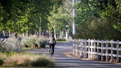 Ann peddling away (Schoonmaker III) Tags: bicycle bicyclist bikepath santaclaritaca sanfrancisquitocreektrail ann bicycleporn