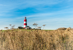 Scrubland and a local Flasher.... (AJFpicturestore) Tags: lighthouse happisburgh flasher icon iconic scrubland bluesky coast nautical navigation lifesaving alanfoster