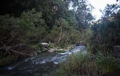 Richmond River, Grevillea Gorge (dustaway) Tags: river streamscape streambed richmondvalley richmondriver grevillea northernrivers nsw australia landscape australianlandscape