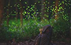 好久沒帶阿愣出門♥ (M.K. Design) Tags: 台灣 南投縣 埔里鎮 賞螢 秘境 螢火蟲 火金姑 長曝 紙箱人 自然 風景 夜景 夜拍 淺景深 散景 綠光 閃閃 長焦 壓縮感 生活 旅行 樹林 期間限定 高動態範圍 taiwan nantou puli country forest firefly fireflies longexposure nikon d800e afs 105mmf14e tele bokeh landscapes danboard nature night life travel green lights 阿愣